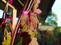Belle piante vibranti della casa dalla finestra immagine stock libera da diritti