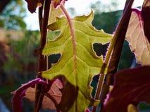 Belle piante vibranti della casa dalla finestra fotografie stock