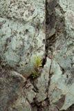 Belle pierre naturelle dans mamie Canaria Photographie stock libre de droits