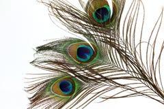 Belle piume del pavone su fondo bianco Immagini Stock Libere da Diritti