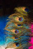 Belle piume di uccello per gli obiettivi decorativi Fotografia Stock Libera da Diritti
