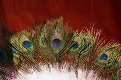 Belle piume di uccello per gli obiettivi decorativi Immagini Stock