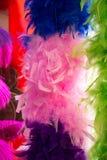 Belle piume di uccello per gli obiettivi decorativi Fotografie Stock