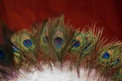 Belle piume di uccello per gli obiettivi decorativi Fotografie Stock Libere da Diritti