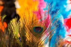 Belle piume di uccello per gli obiettivi decorativi Immagine Stock