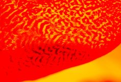 Belle piume di uccello per gli obiettivi decorativi Immagini Stock Libere da Diritti
