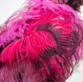 Belle piume di uccello rosse come fondo Immagini Stock