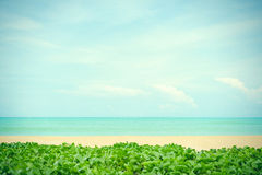 Belle plage image stock