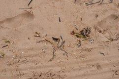 Belle plage avec les pierres noires et sable blanc fin en Espagne image libre de droits