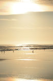 Belle plage d'or au lever de soleil Photos libres de droits