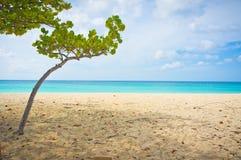 Belle plage dans Aruba, Caraïbes Photos stock
