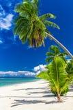 Belle plage de palmier sur le cuisinier Islands un jour ensoleillé Photo libre de droits