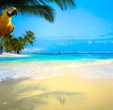 Belle plage tropicale des Caraïbes de mer d'art Image stock