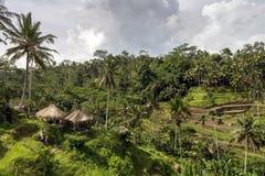 Belle plantation de champ de terrasse de paddy chez Tegallalang pendant le début d'après midi Photos stock