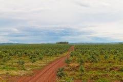 Belle plantation en caoutchouc Images stock