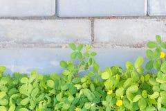 Belle plante verte au-dessus des murs dans le jardin Image libre de droits
