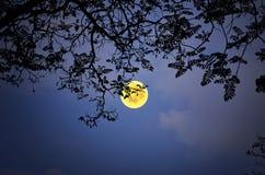 Belle pleine lune dans la nuit d'hiver Image stock