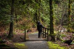 Belle pluie Forest Creek dans le nord-ouest Pacifique Image libre de droits