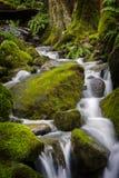 Belle pluie Forest Creek dans le nord-ouest Pacifique Images stock
