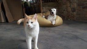 Belle pose d'amis de chat et de chien Images libres de droits