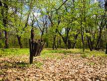 Belle poubelle à côté de la forêt Image stock