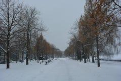 Belle promenade d'hiver avec des bouleaux, des arbres et la neige blanche Remblai le long de la rivière de Dnieper dans la ville  photos stock