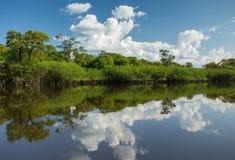 Belle réflexion de la jungle d'Amazone sur l'eau Image stock