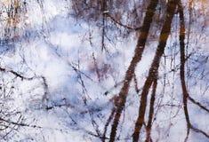Belle réflexion des branches d'arbre dans l'eau en premier ressort en parc Fond abstrait d'aquarelle dans des tons lilas-bleus Photographie stock libre de droits