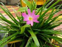 Belle relation de fleur et de prise entre la nature Photo libre de droits