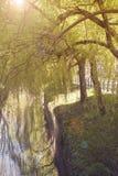 Belle rivière avec des arbres et herbe accrochant plus de Photo libre de droits