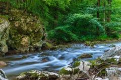 Belle rivière de montagne avec de petites cascades entourées par des arbres images stock