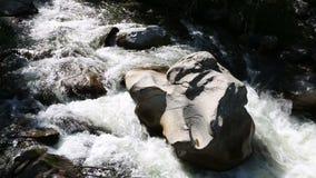 Belle rivière de montagne grand Ilgumen dans Altai banque de vidéos