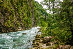 Belle rivière orageuse de montagne entre la force d'arbres de la nature image libre de droits