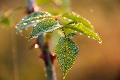 belle rosée sur des feuilles à l'automne de lever de soleil photo stock