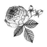 Belle rosa e foglie in bianco e nero del mazzo illustrazione di stock