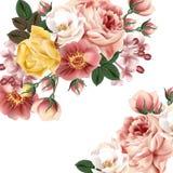 Belle rose illustrazione vettoriale