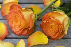 Belle rose arancioni che si trovano su una tabella Fotografia Stock