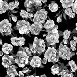 Belle Rose Background sans couture Image libre de droits