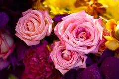 Belle rose come fondo Immagine Stock Libera da Diritti
