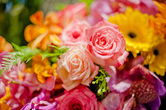 Belle rose come fondo Fotografia Stock