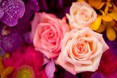 Belle rose come fondo Immagini Stock