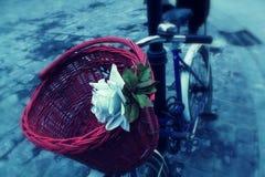 Belle rose de blanc et un panier rouge sur le vélo Images libres de droits