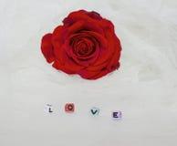 Belle rose de rouge à Tulle blanc image stock