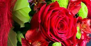 Belle rose de rouge dans la fin de groupe  Photos stock