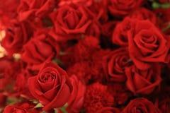 Belle rose de rouge dans le bouquet de fleur Images libres de droits