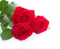 Belle rose de trois rouges Image stock