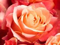 Belle rose del mazzo Fotografia Stock Libera da Diritti
