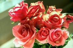 Belle rose dentellare Immagini Stock