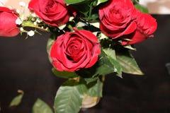 Belle rose e foglie verdi rosse Immagine Stock Libera da Diritti
