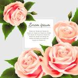 Belle rose e struttura dei fiori Fotografie Stock